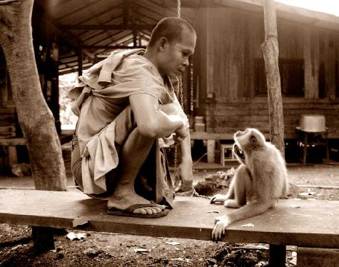 The Monk & The Monkey - photography that inspires peace and compassion for the environment and all living things